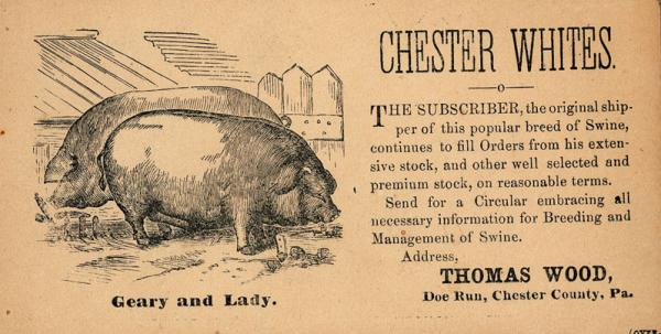 """Chester Whites"" advertising card Thomas Wood, Doe Run, Chester Co."