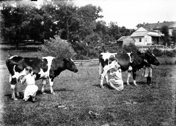 Black and white image of girls milking two cows