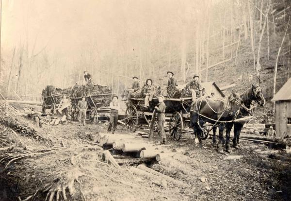 Workers sit atop and stand beside horse drawn wagons loaded with bark.