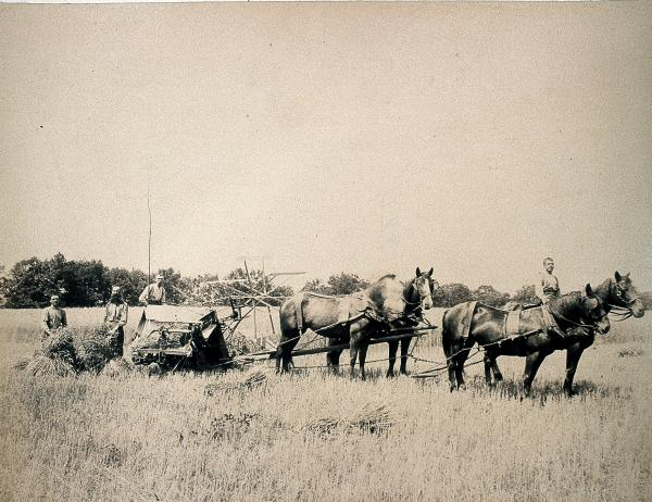 Hay mowing (four horses and boy on front horse)