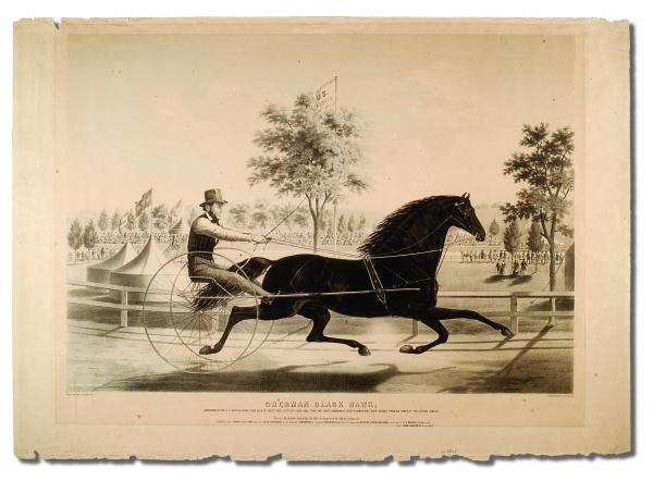 A man races his beautiful, black horse, who is harnessed to a cart.