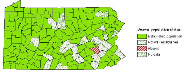 Map, by county, of the distribution and population status of beaver in Pennsylvania, 2008.