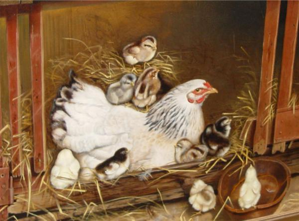 Mother hen is sitting on a nest, surrounded by nine baby chicks