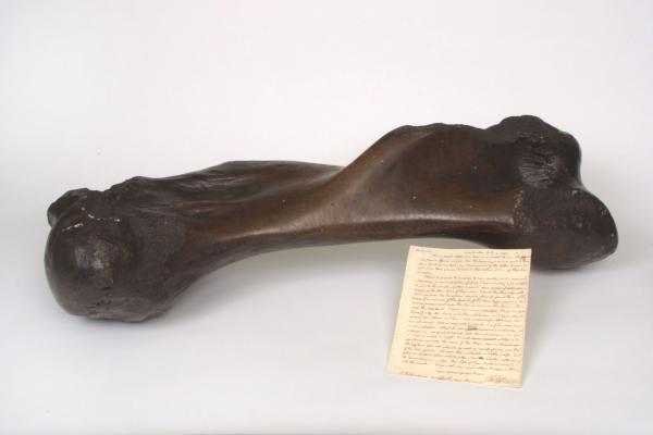 Image of Mastodon bone