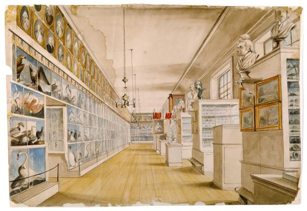 Watercolor of The Long Room, Interior of Front Room in Peale's Museum, with shelves housing plant and animal specimens and art.