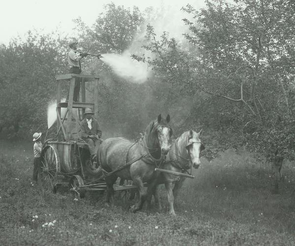 Black and white image of farmers spraying fruit trees from atop a stand attached to a wagon which is  drawn by two Morgan horses.