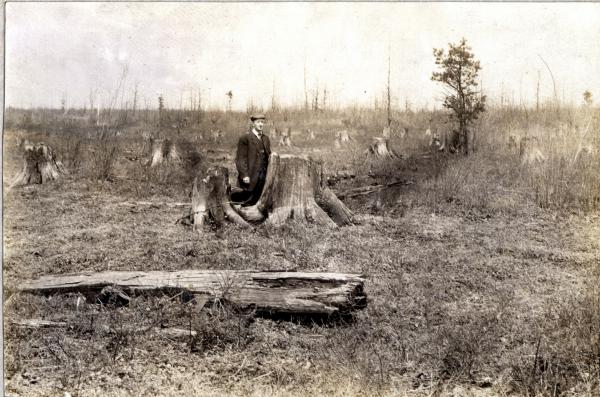 A circa 1920 photograph of a forest in Tioga County, devastated by destructive logging practices.