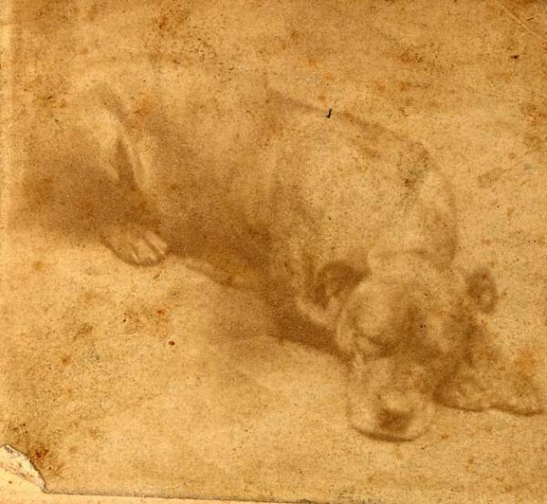 Shown in this faded carte-de-visite is Sallie, the mascot of the 11th Pennsylvania Volunteer Infantry.