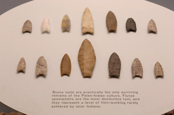 Array of Paleo-Indian period fluted spearpoints