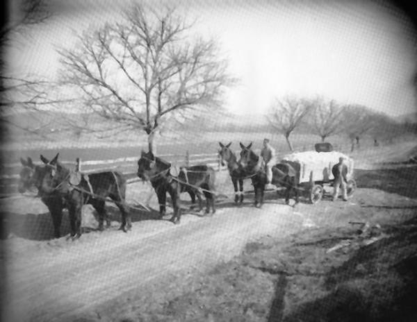 Six mules are hitched to the Lime Wagon. A farmer sits atop the rear left mule's back and another stands to the side of the wagon.