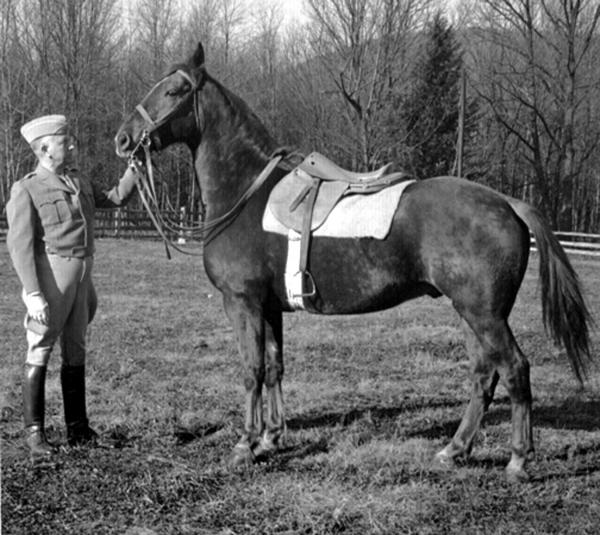 Horse and Major General