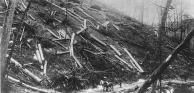 After Hemlock trees were stripped of their bark, the logs were left to dry on the mountainside. Once dry, the logs were retrieved for processing. Note the size of the logs shown in this photograph compared to the logger and his horses.