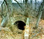 Photograph of a brush overgrown tubular entrance.