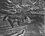 A mule and mule driver in a coal mine. Mules - many spending their entire lives in a mine - were a common means of transporting coal and workers in the 19th and early 20th centuries. Drivers usually named the animals to reflect their disposition, such as Sparky or Pokey. They also sang a common tune called