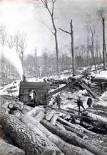 "After 1880, the introduction of the logging railroad allowed harvesting in previously inaccessible areas. Shown here, logs are loaded onto rail cars by ""modern"" steam cranes, and transported to saw mills by train."