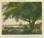An etching showing a giant elm tree on the banks of a busy river.'