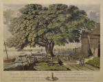 "The giant elm tree where Native Americans may have met with William Penn became iconic to the founding of Pennsylvania. Known as the ""Treaty Elm,"" it is depicted here in a watercolor by George Lehman."