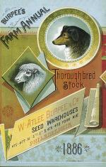 Burpee's Farm Annual Thoroughbred Stock,  1886 cover, showing dog and sheep'