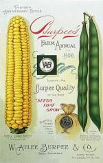 A color image of a shucked ear of corn and long green beans.'