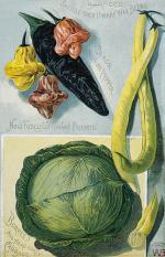 Burpee's Farm Annual Inside page: 1891 '