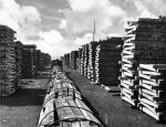 Stacked wooden ties, Reading RR Creosote plant
