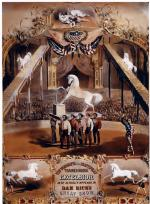 Cirus poster of the trained horse, standing on his hind legs, in the ring. Smaller images of his stunt capabilities encirle the canvas.