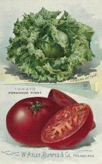 1894 Inside Page 2  W. Atlee Burpee and Co. (Iceberg lettuce and Fordhook tomato)